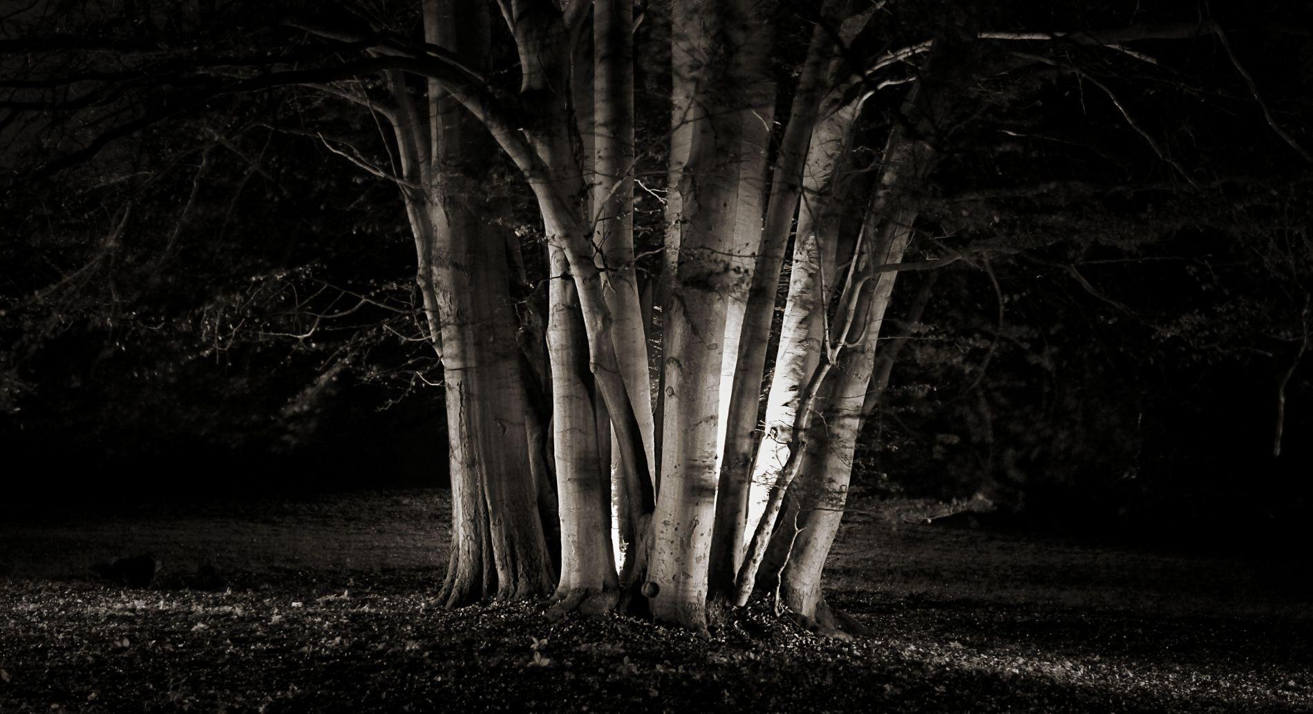 fotokurs th ringen nachtfotografie alte b ume lichtmalerei naturfotografie. Black Bedroom Furniture Sets. Home Design Ideas